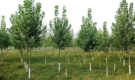东方花园植树添绿 责任与发展同行